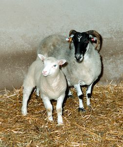 Dolly-and-surrogate-mother