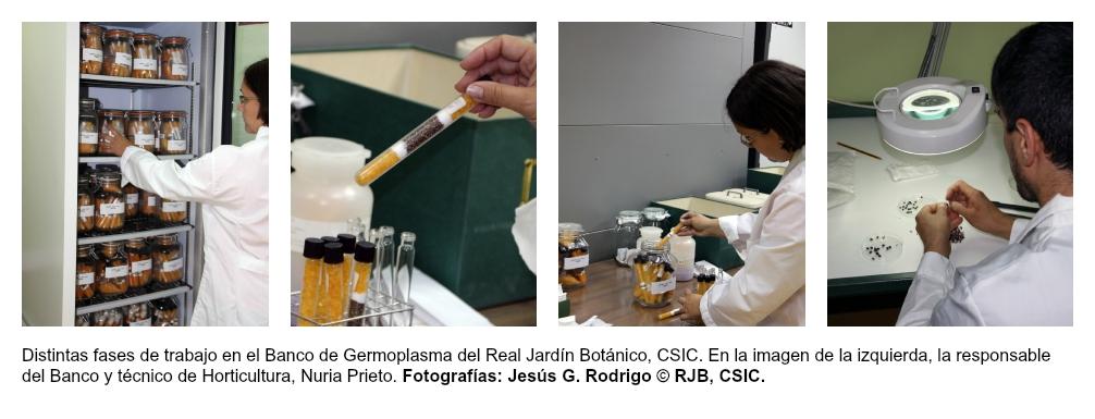banco_germoplasma_rjb